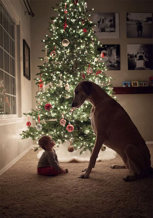 The Eternal Bond Between Babies And Their Dogs Beautifully Captured