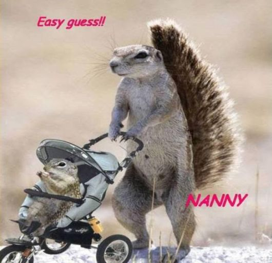 Animals And Their Funny Roles