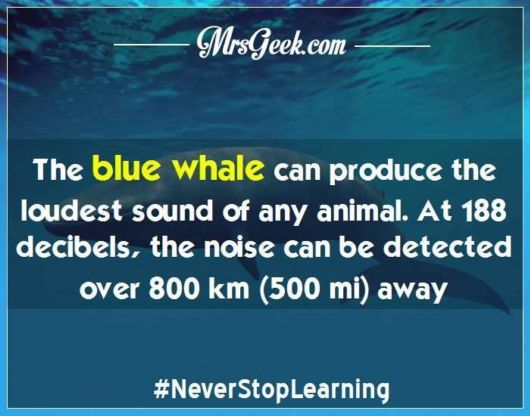29 Incredible Animal Facts That Will Amaze You