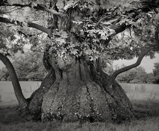 A Collection Of Ancient Trees