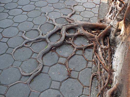 Tree Roots Winning The Fight Against Concrete