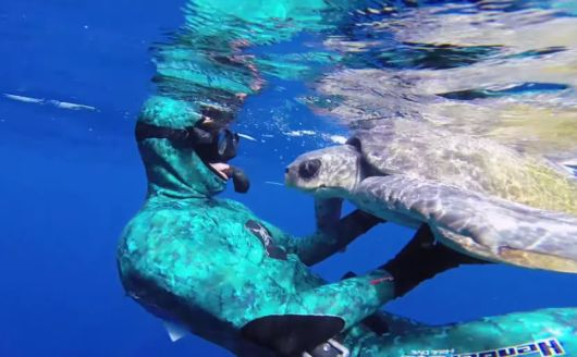 Sea Turtle Hugs Diver After Being Set Free