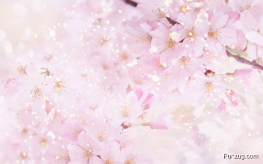 Click to Enlarge - Beautiful Spring Wallpapers