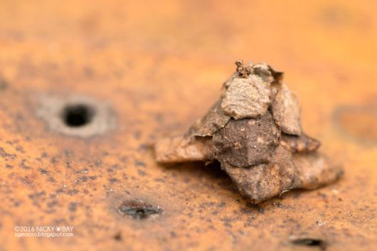 Truly Mysterious Structures From The Worlds Smallest Architects